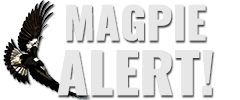 MAGPIE ALERT! For Aussie Cyclists, Walkers & Runners to share Swooping Magpie Attacks